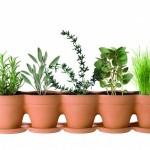 """Jardinière """"Cosse de petits pois"""" de François Cler"""