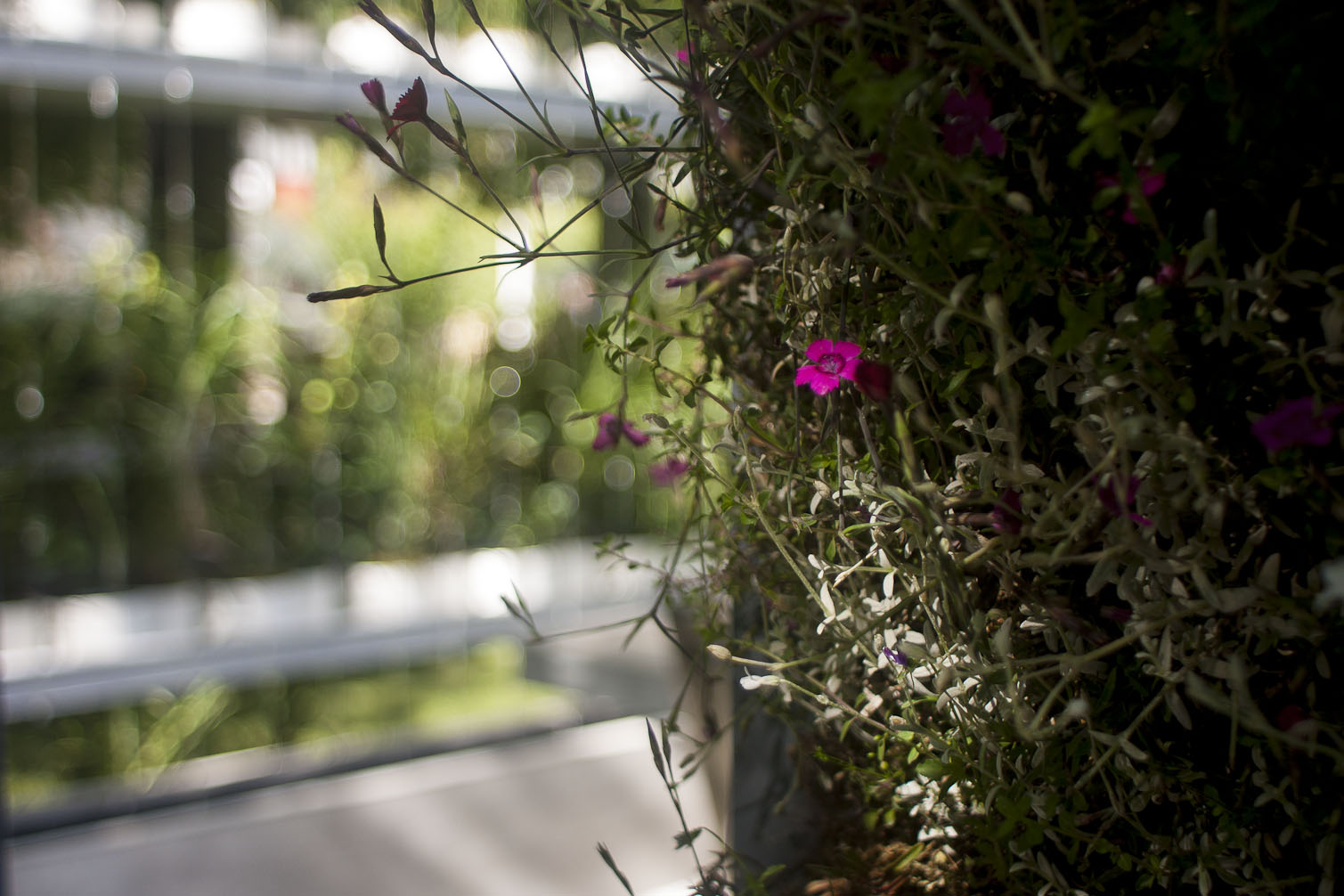 Jardins jardin aux tuileries 2014 un je ne sais quoi d co for Jardin tuileries