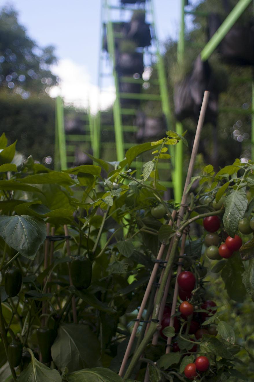 Cadran solaire de laorus par patrick nadeau un je ne for Jardin aux tuileries