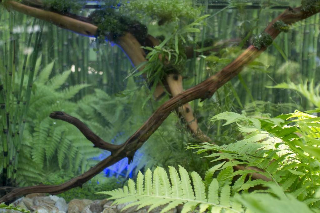 Mutation... l'eau source de vie Jardin L'Ami des jardins imaginé par Jardins de Babylone