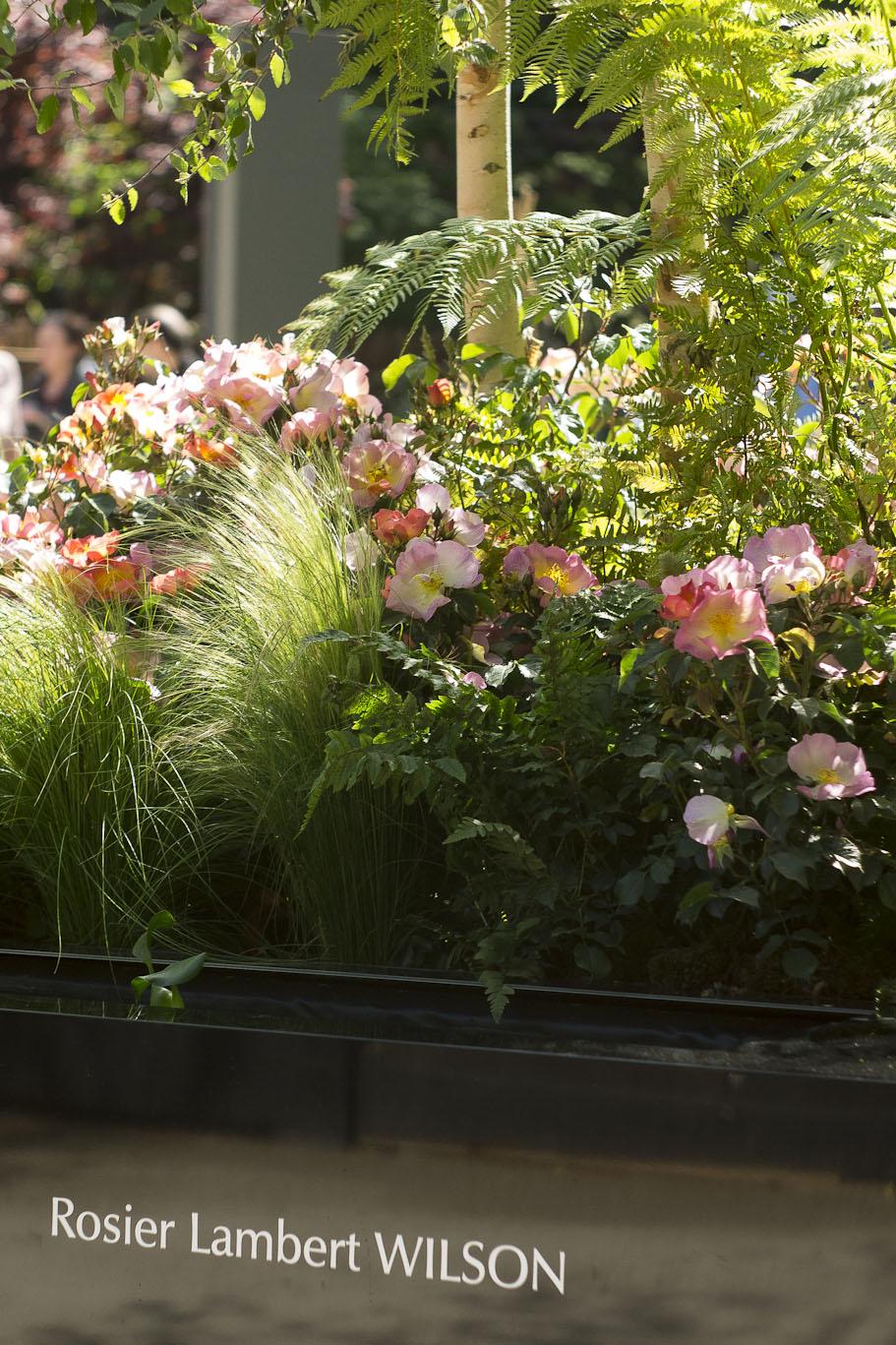 Le nouveau Rosier Lambert Wilson par Truffaut - Jardins Jardin 2015 aux Tuileries - Paris